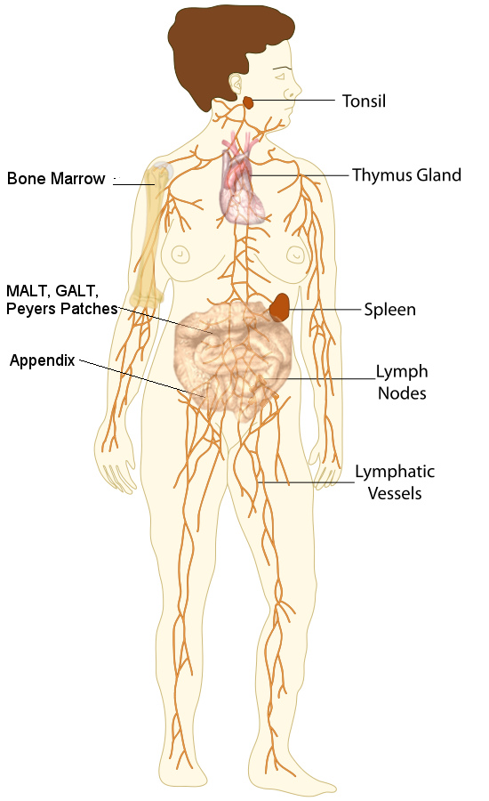 7 Tips To Move Your Lymph